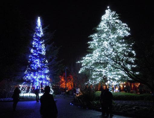 クリスマスツリー02.jpg
