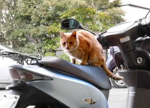 バイクの上の猫.jpg