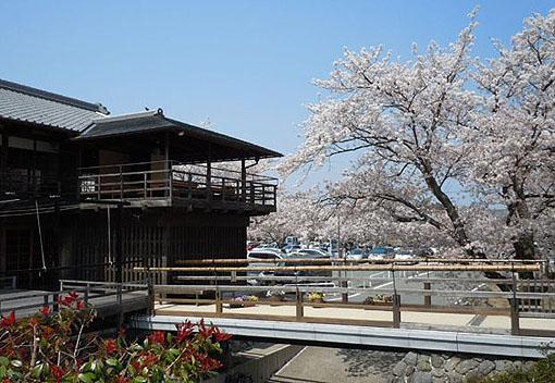 五十鈴川桜_17.jpg