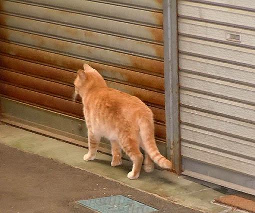 商店街の猫.jpg