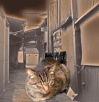 路地猫.jpg