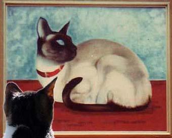 catwatching.jpg