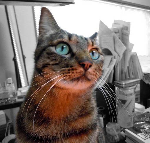 wonder-cat.jpg