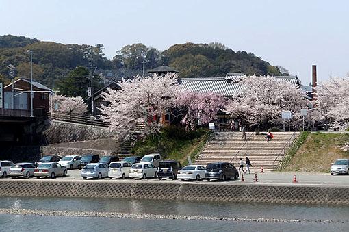 五十鈴川桜_01.jpg