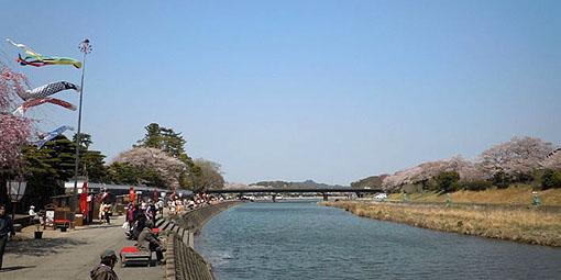 五十鈴川桜_31.jpg