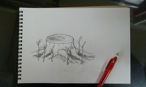 切り株描画A02.jpg