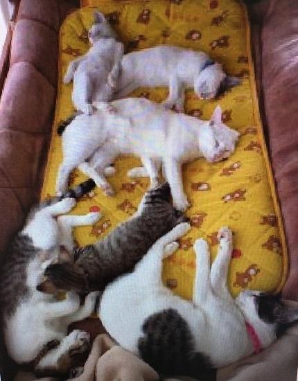 猫たち雑居.jpg