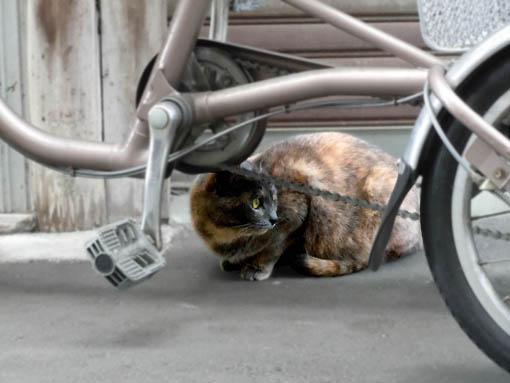 覗く猫.jpg