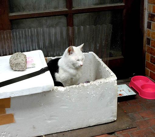 門前の猫.jpg