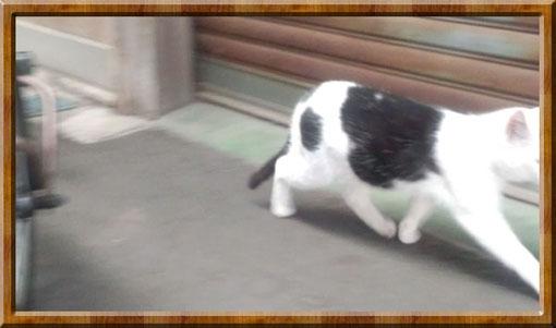 駆け足のネコ.jpg