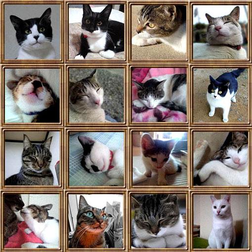 cats-correction_02.jpg