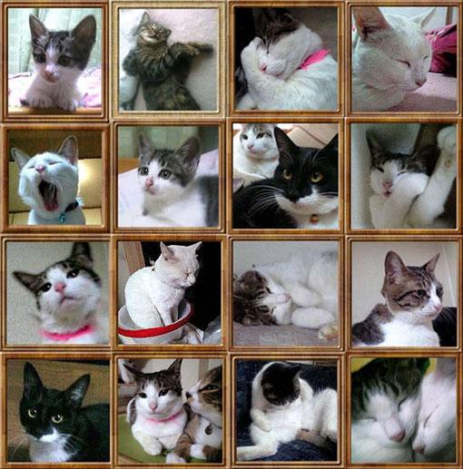 cats_correction-01.jpg