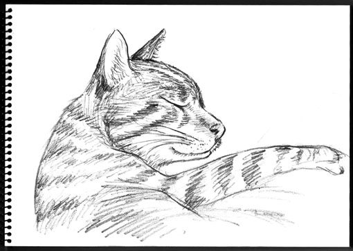 sketchcat.jpg